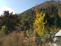 秋天在山森林里 免版税库存照片