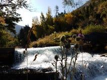 秋天在山森林里 免版税库存图片