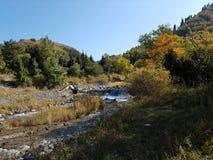 秋天在山森林里 库存图片
