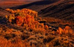 秋天在山脉 免版税图库摄影