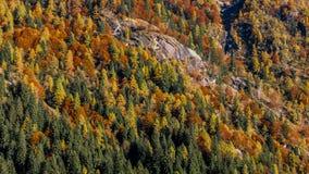 秋天在山腰的森林纹理 图库摄影