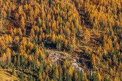 秋天在山腰的森林纹理 免版税图库摄影