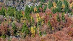 秋天在山腰的森林纹理 免版税库存图片