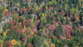 秋天在山腰的森林纹理 免版税库存照片
