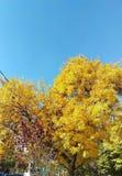 秋天在布加勒斯特 库存图片