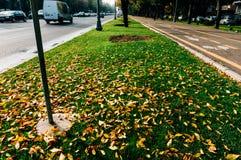 秋天在布加勒斯特 免版税库存图片