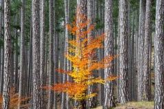 秋天在希腊 库存图片