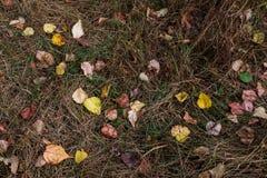 秋天在干燥棕色死的高下落的草离开 库存照片