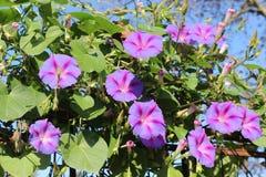 秋天在庭院里开花绽放 库存图片
