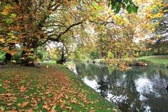秋天在庭院里 免版税库存图片