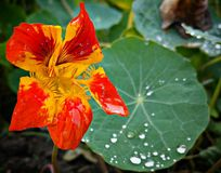 秋天在庭院里 库存图片