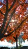 秋天在庭院3里 免版税库存图片