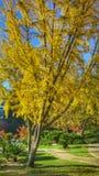 秋天在庭院5里 库存照片