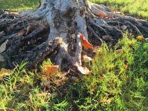 秋天在得克萨斯 库存图片