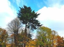 秋天在意大利 图库摄影