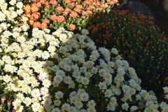 秋天在所有色彩和气味的颜色上是富有的 库存照片