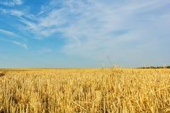 秋天在收获的麦子,接近以后的亩茬地 免版税库存照片