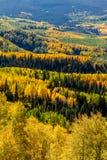秋天在斯廷博特斯普林斯科罗拉多 库存图片