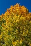 秋天在斯廷博特斯普林斯科罗拉多 图库摄影