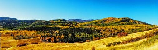 秋天在斯廷博特斯普林斯科罗拉多 库存照片