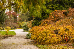 秋天在斯洛文尼亚 库存图片