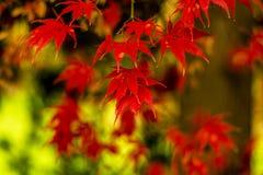 秋天在斯洛文尼亚 库存照片