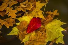 秋天在斯洛文尼亚 免版税库存图片