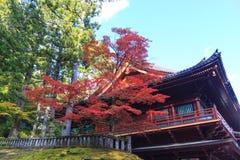 秋天在日光附近,日本Rinnoji寺庙的槭树  免版税库存图片