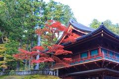 秋天在日光附近,日本Rinnoji寺庙的槭树  免版税库存照片