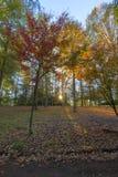 秋天在日出的色的树 库存照片