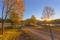 秋天在日出的色的树 库存图片