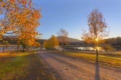 秋天在日出的色的树 免版税图库摄影
