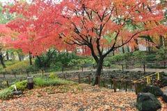 秋天在日本-落的槭树叶子 免版税库存照片