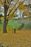 秋天在日本-落的银杏树叶子 库存照片