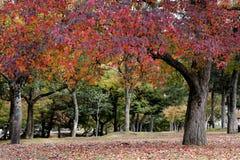 秋天在日本 库存图片