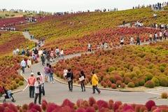 秋天在日立海滨公园 免版税库存图片