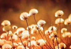 秋天在日落期间的草甸植物 浅深度的域 口气 库存图片