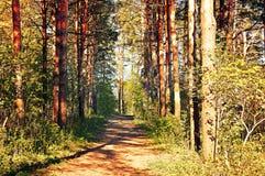 秋天在日落的秋天晴朗的晚上上色了自然风景-秋天森林 免版税库存照片