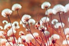 秋天在日落(软的焦点)期间的草甸植物 免版税库存图片