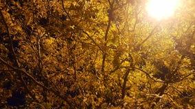 秋天在晚上 免版税库存照片
