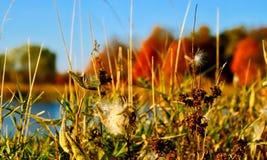 秋天在有有杂草的在前景和湖的印第安纳森林里在背景中 库存照片