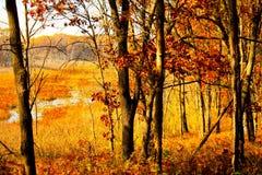 秋天在有沼泽的印第安纳森林里在背景中 免版税图库摄影