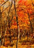 秋天在有沼泽的印第安纳森林里在背景中 免版税库存图片