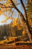 秋天在有湖的公园 库存图片