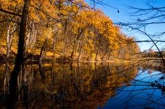秋天在有湖的森林里 秋季日留下忧郁黄色 10月 库存图片