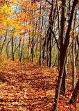 秋天在有阴影和下落的叶子的印第安纳森林里横跨道路 免版税库存照片