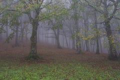 秋天在有雾的, Monte Cucco NP,翁布里亚,意大利森林里 库存照片