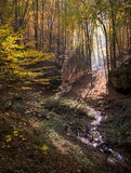 秋天在有黄色叶子和太阳的一个五颜六色的森林发出光线 库存图片