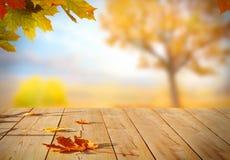 秋天在木桌上的槭树叶子 图库摄影