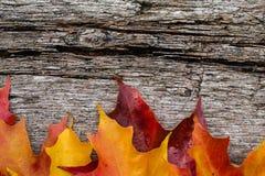 秋天在木桌上的槭树叶子 库存图片